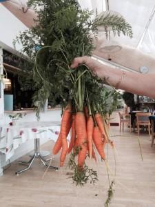 Egen odlade morötter